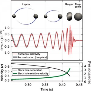 "LIGO didn't watch the whole many-year-long dance of the black hole duo, but it did see the last few cycles of the death spiral, the merger itself, and the ""ringing"" effect as the merged black hole settled into its new form. B. P. Abbott & others, ""Observation of Gravitational Waves from a Binary Black Hole"", Physical Review Letters"